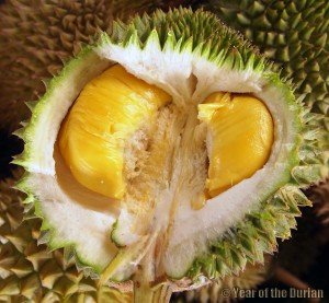 Musang King durian fruit odour survey