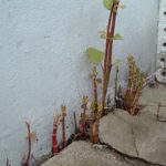 spring-growth-through-concrete
