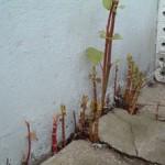 spring-growth-through-concrete