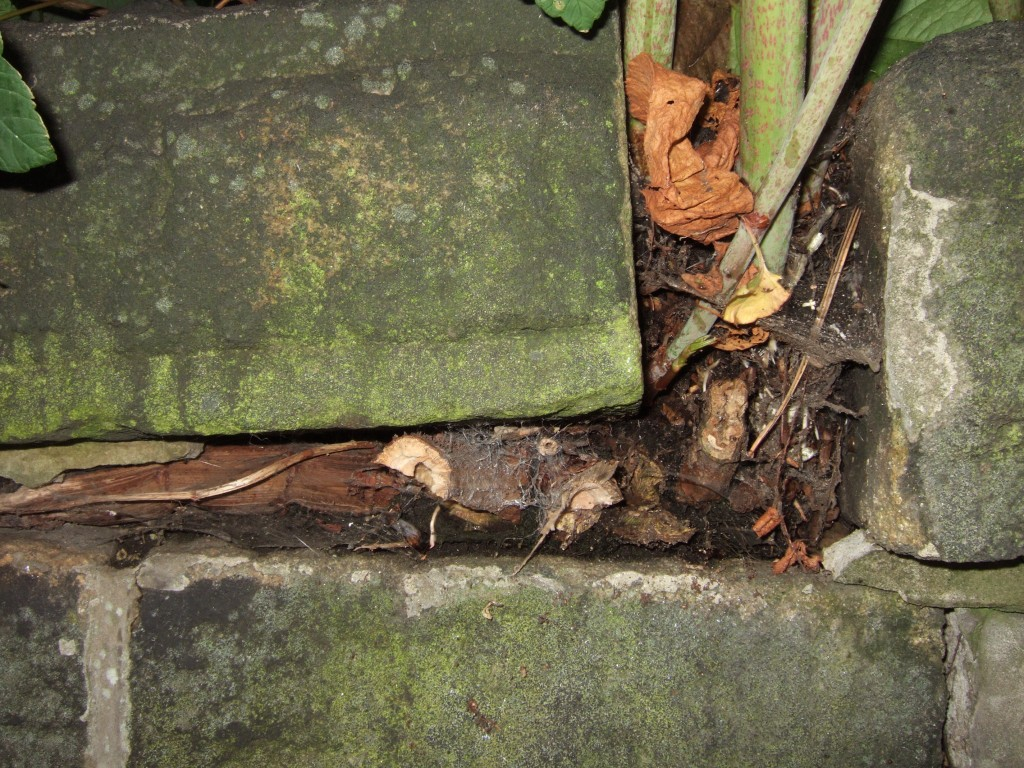 Japanese knotweed damage