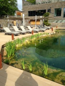 Freshwater swimming pool habitat creation
